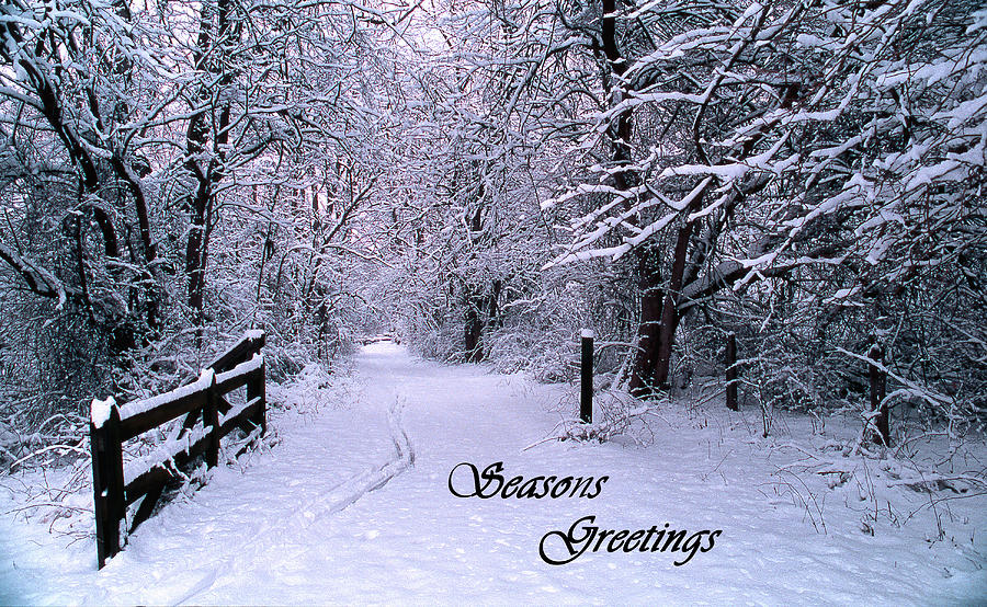 http://images.fineartamerica.com/images-medium-large/snowy-trail-seasons-greetings-skip-willits.jpg