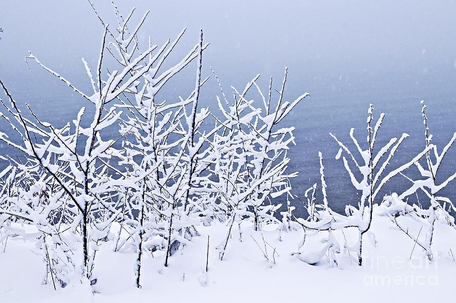 Winter Photograph - Snowy Trees by Elena Elisseeva