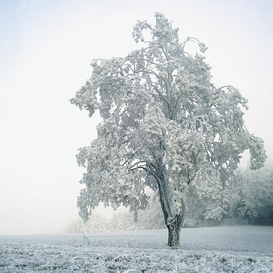 Snowy Winter Landscape Photograph