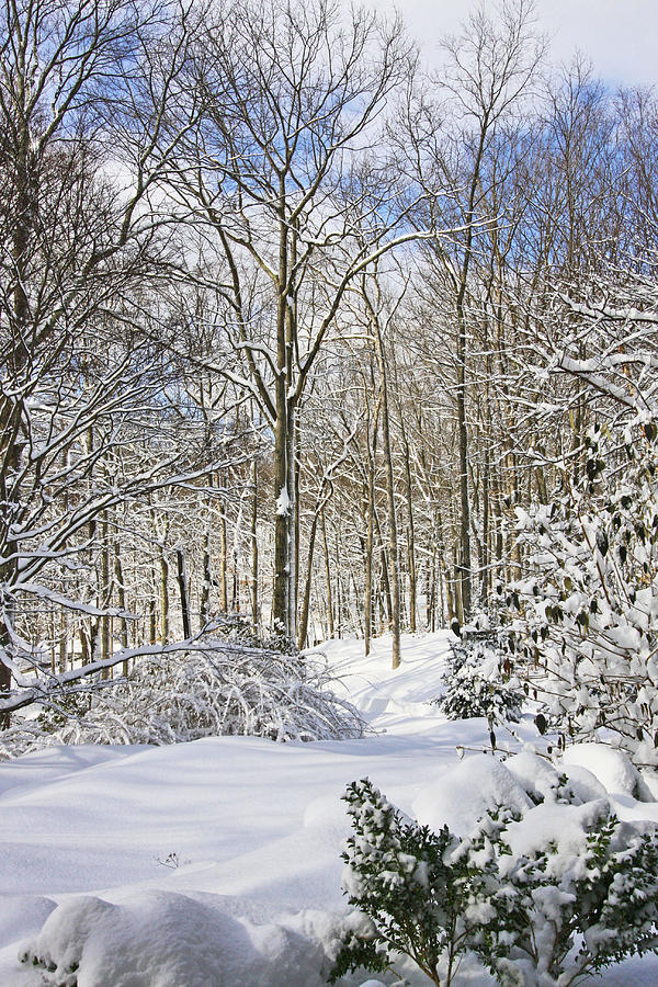 Snowy Winter Wonderland Photograph  - Snowy Winter Wonderland Fine Art Print