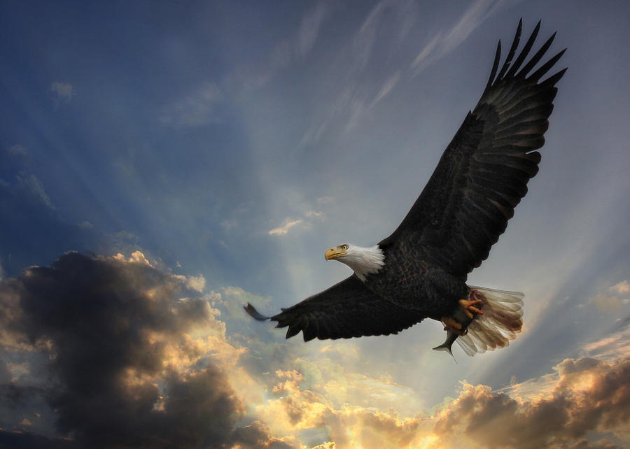 Soar To New Heights Photograph  - Soar To New Heights Fine Art Print