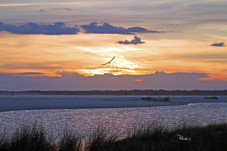 Soaring At Sunset Photograph  - Soaring At Sunset Fine Art Print