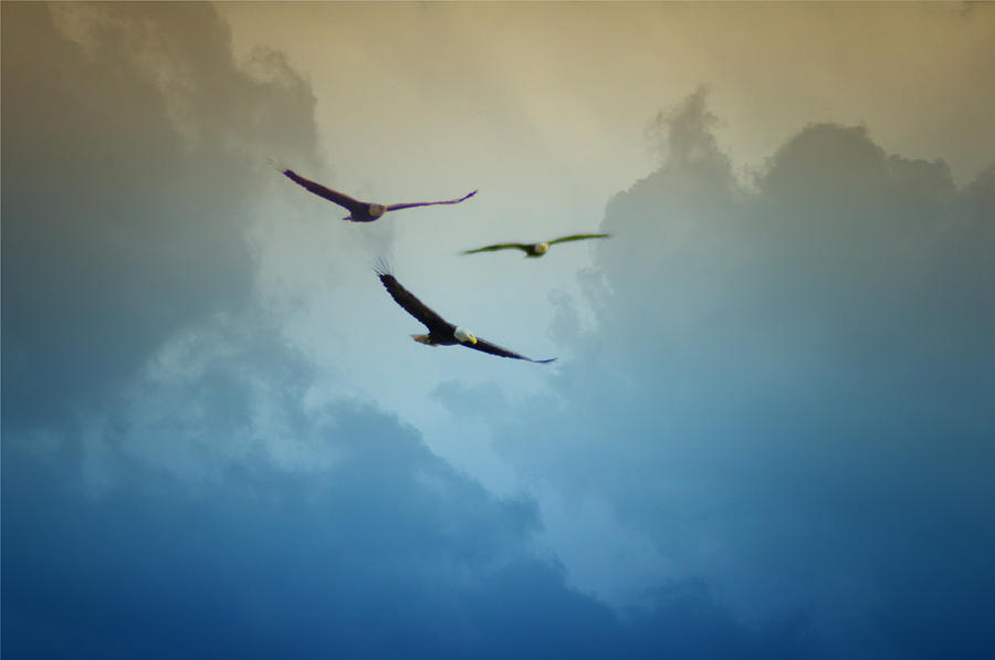 Soaring Eagles Photograph  - Soaring Eagles Fine Art Print