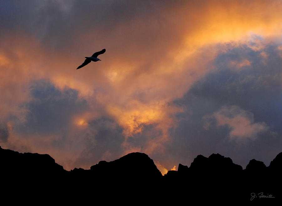 Soaring In The Midnight Sun Photograph  - Soaring In The Midnight Sun Fine Art Print