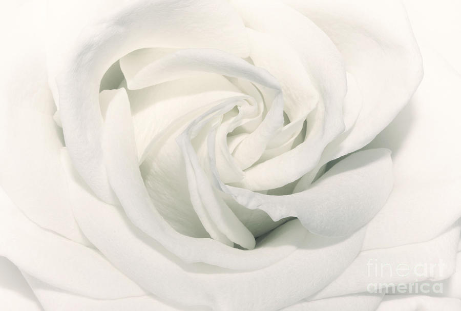 Soft White Photograph  - Soft White Fine Art Print