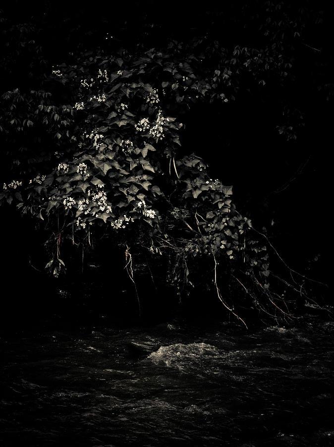 Solace Photograph