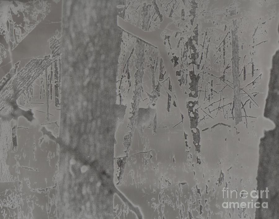 Solarized Deer Photograph