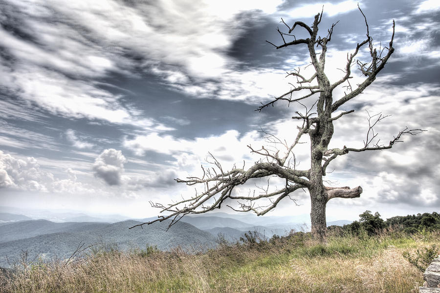 Solemn Tree Photograph  - Solemn Tree Fine Art Print
