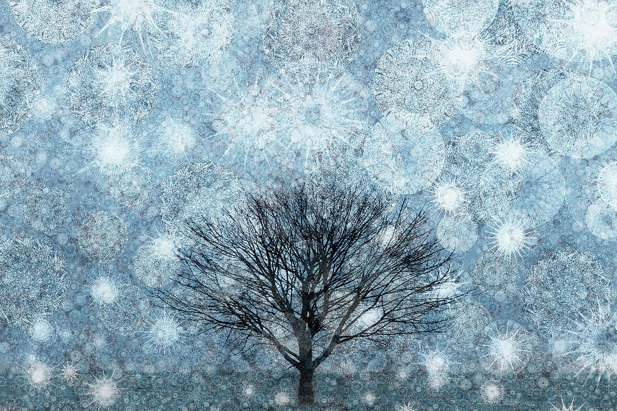 Solitary Winter Tree Caught In A Snow Storm Digital Art  - Solitary Winter Tree Caught In A Snow Storm Fine Art Print