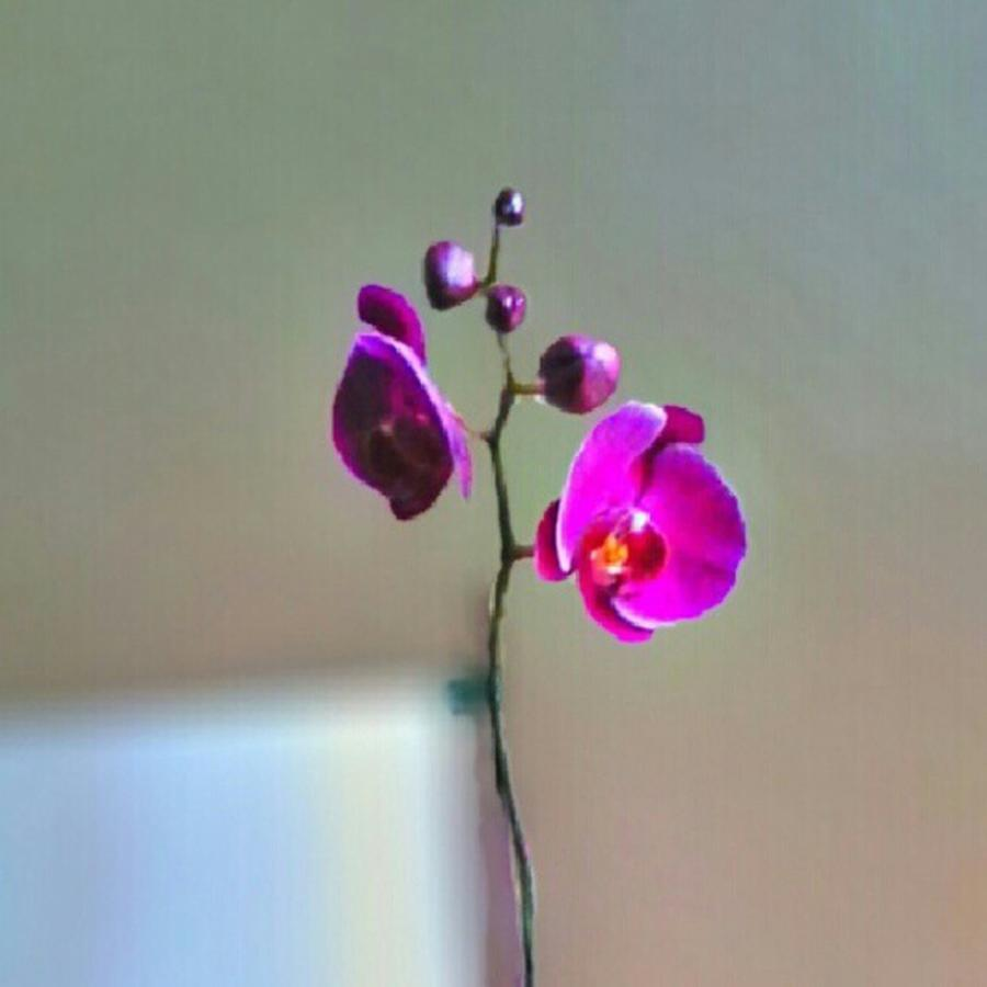 Andrography Photograph - Some #flowers That Were Sent To My Wife by Kel Hill
