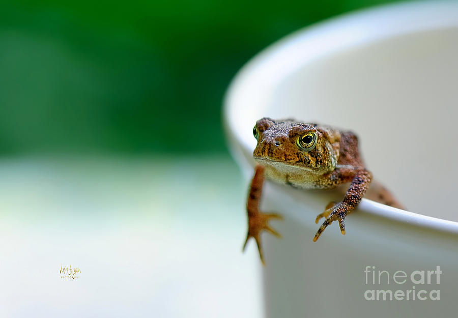 Frog Photograph - Somebody Needs Coffee by Lois Bryan