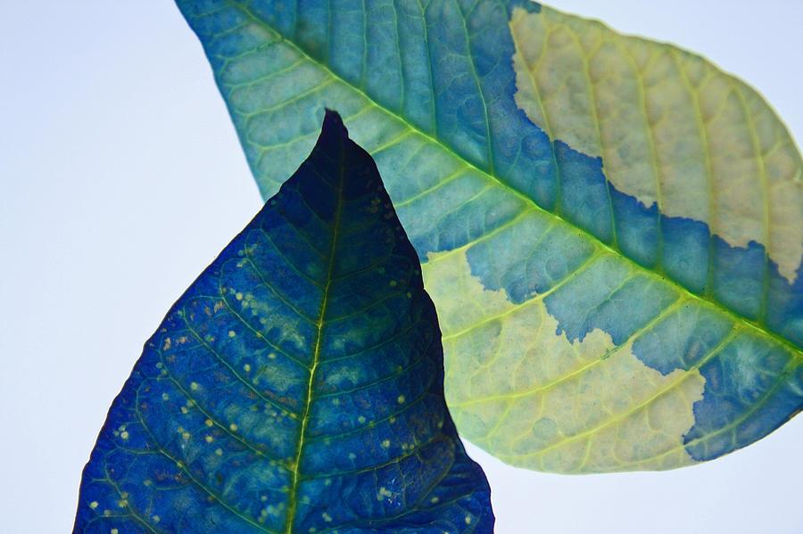 Something Blue Photograph