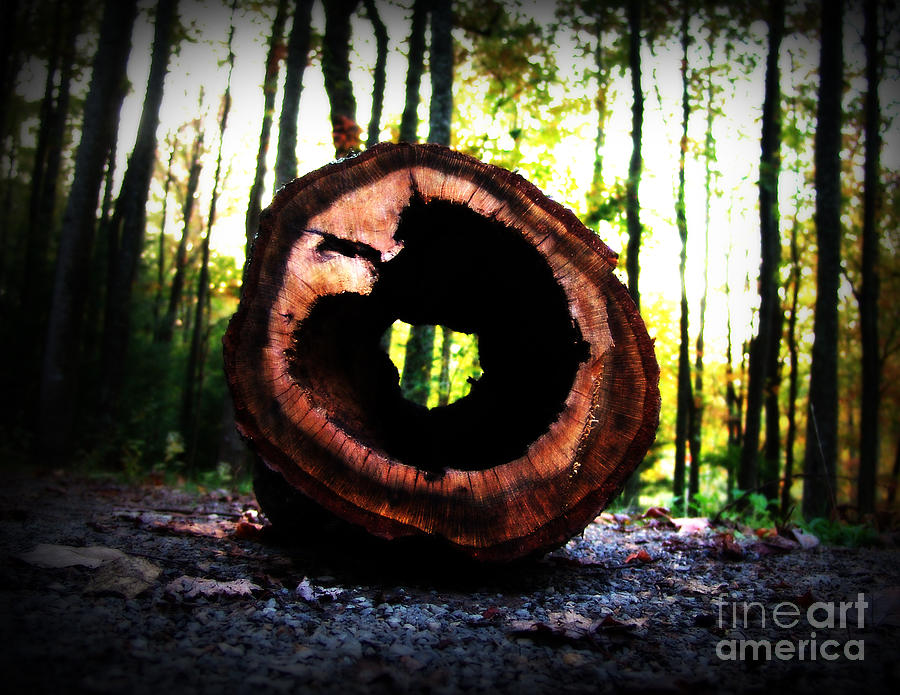 Something Different Photograph  - Something Different Fine Art Print