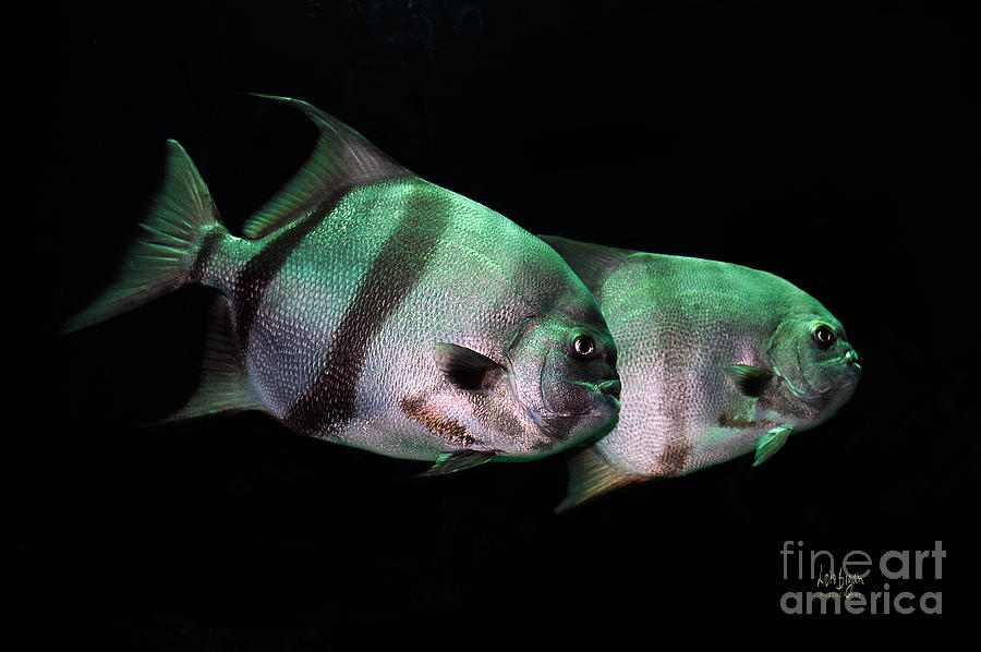 Fish Photograph - Something Fishy This Way Comes by Lois Bryan