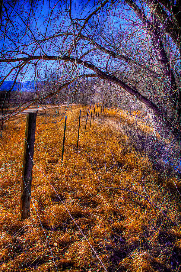 South Platte Fenceline Photograph