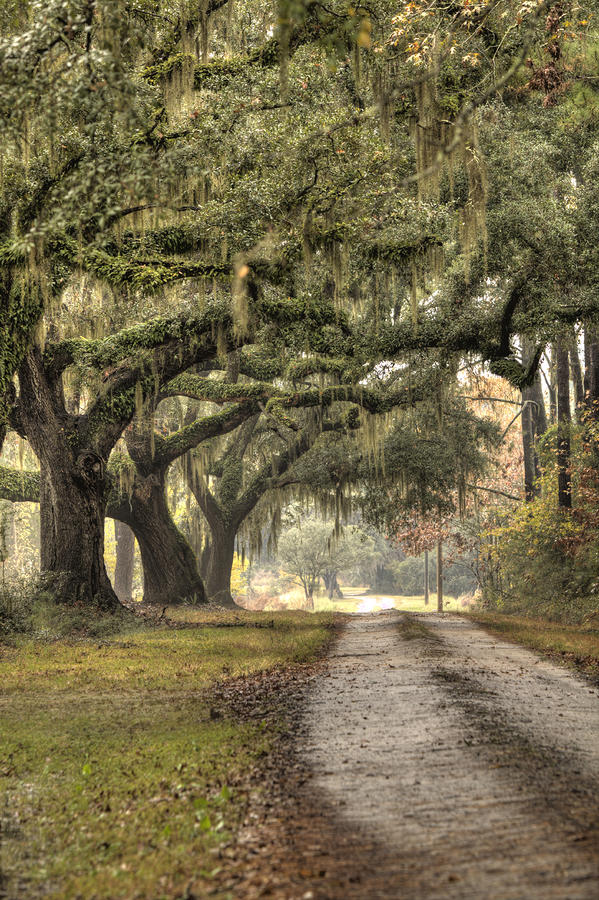 Southern Drive Live Oaks And Spanish Moss Photograph