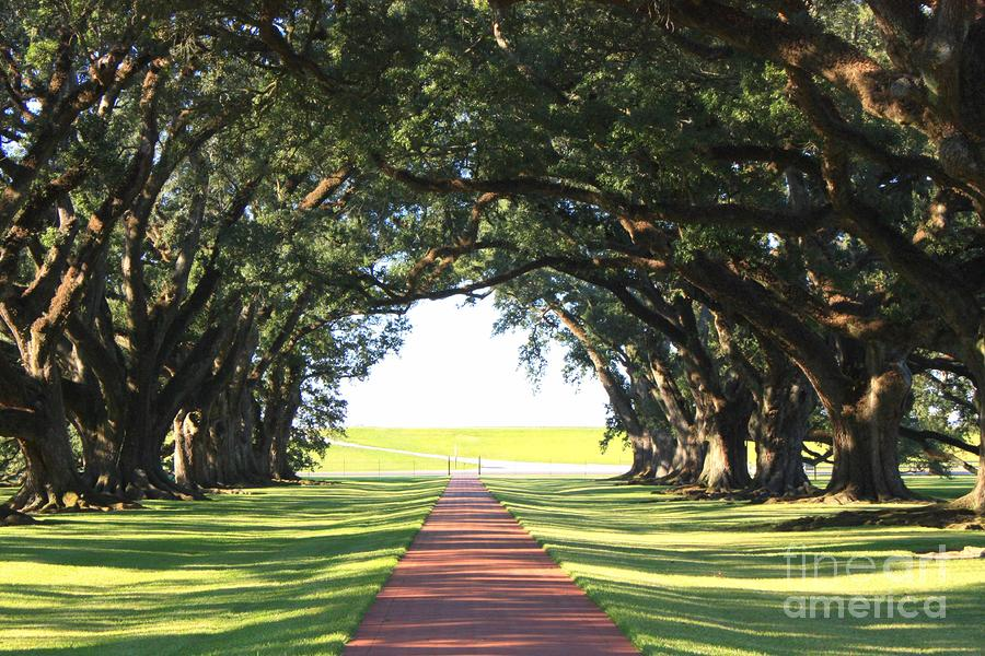 Southern Oaks And Sunshine Photograph  - Southern Oaks And Sunshine Fine Art Print