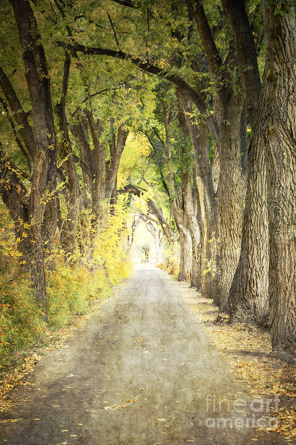Southwest Foliage Road Photograph  - Southwest Foliage Road Fine Art Print