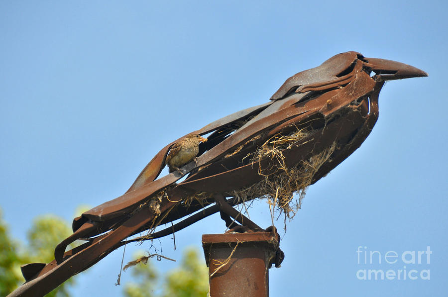 Sparrows Nest is a photograph by Elaine Manley which was uploaded on ...