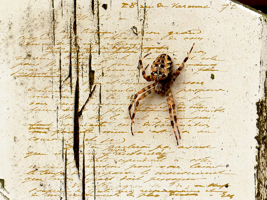 Spider Letter Photograph