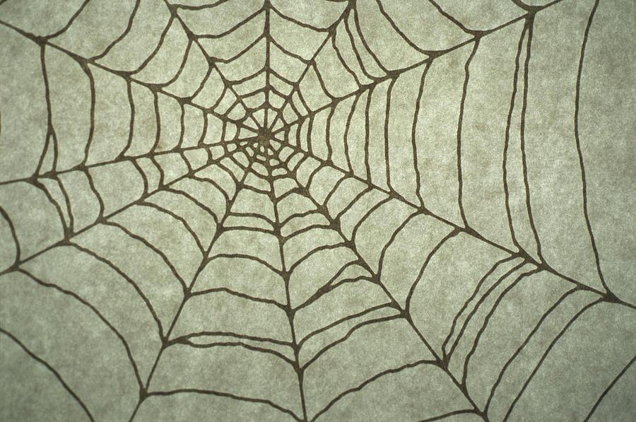 Spider Web Drawing Digital Art By Barbara Chase