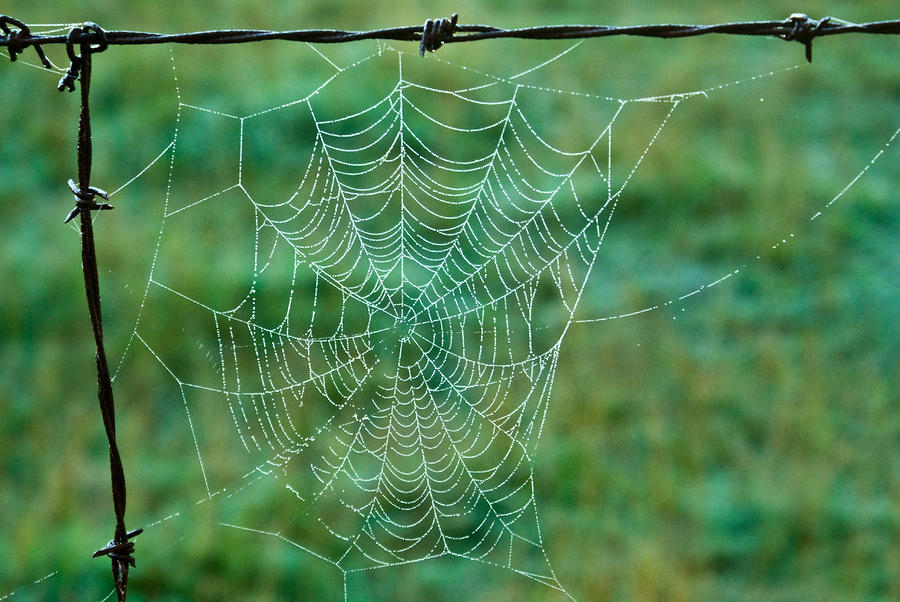 Spider Web In The Springtime Photograph