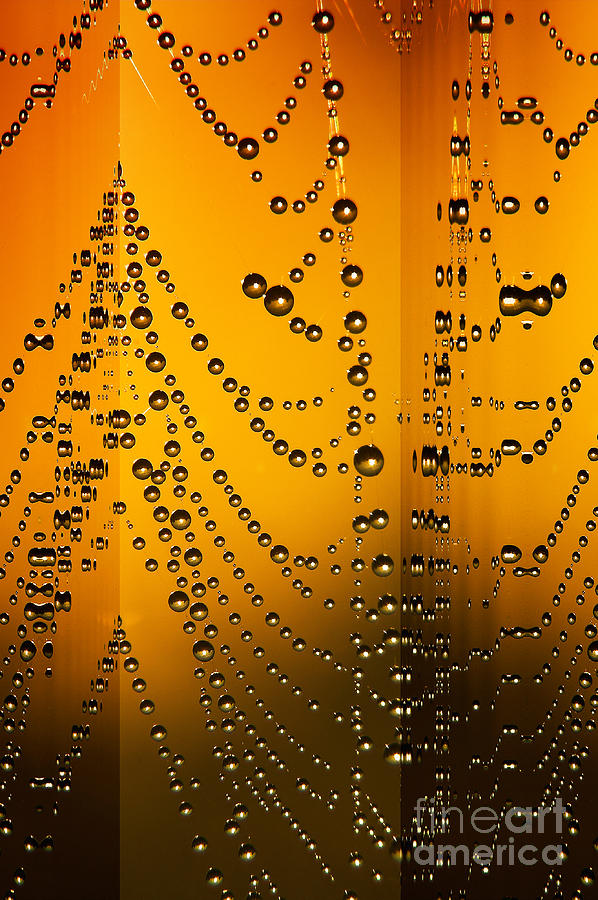 Spider Web Reflections Digital Art  - Spider Web Reflections Fine Art Print
