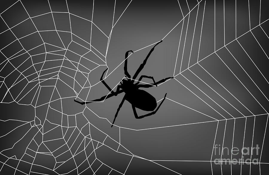 Spider Web With Spider Digital Art