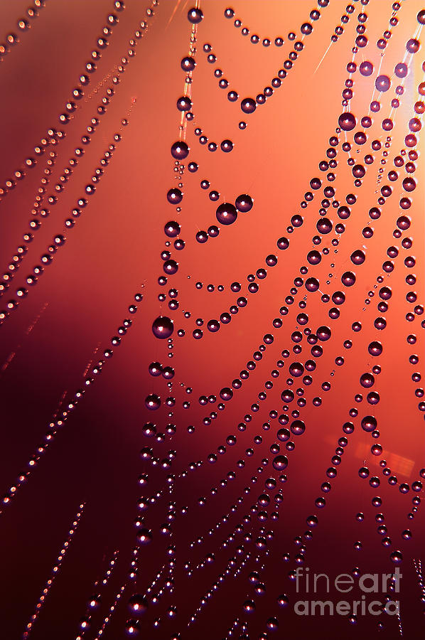 Spiderweb In Red Photograph