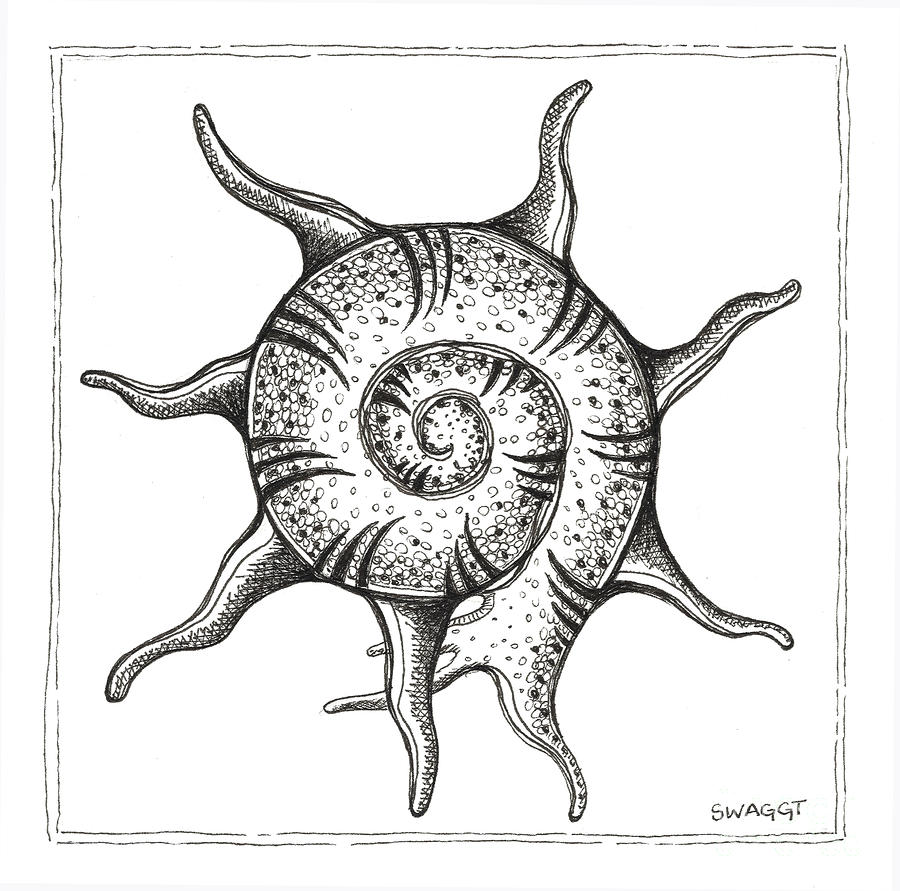 Spiney Nautilus Drawing  - Spiney Nautilus Fine Art Print