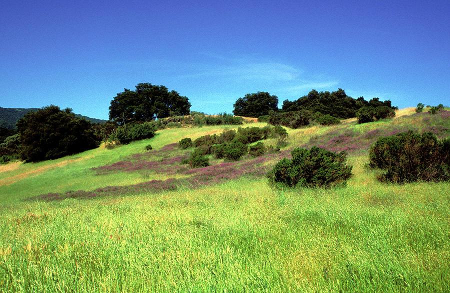 Splendor In The Grass Photograph