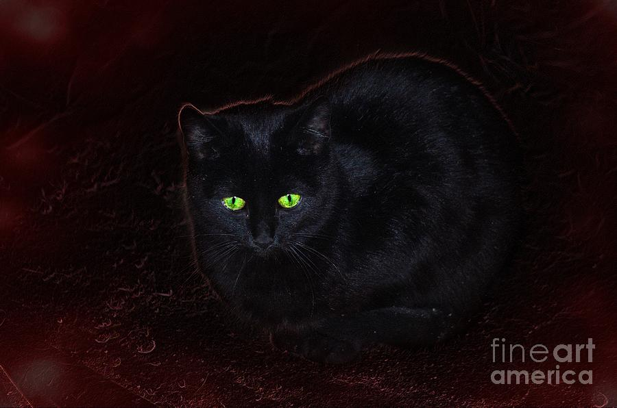 Spooky Photograph