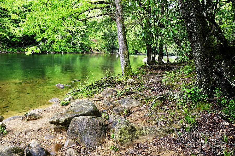 Spring Along Cranberry River Photograph