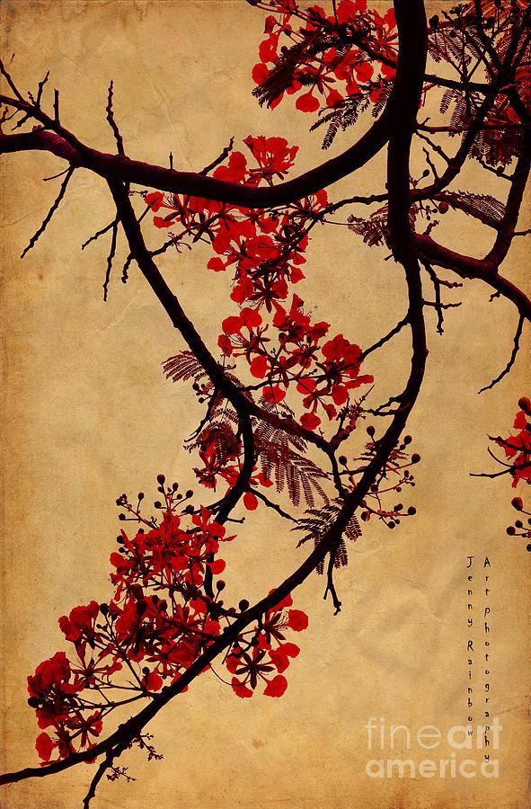 Spring Bloosom In Maldives. Flamboyant Tree I.  Japanese Style Photograph