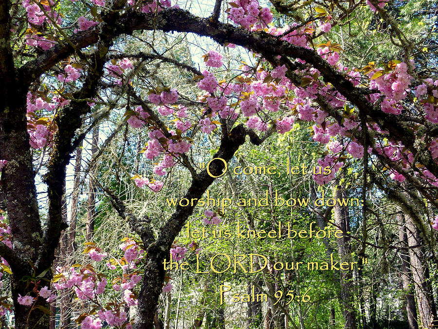 Spring Blossoms With Scripture Photograph  - Spring Blossoms With Scripture Fine Art Print
