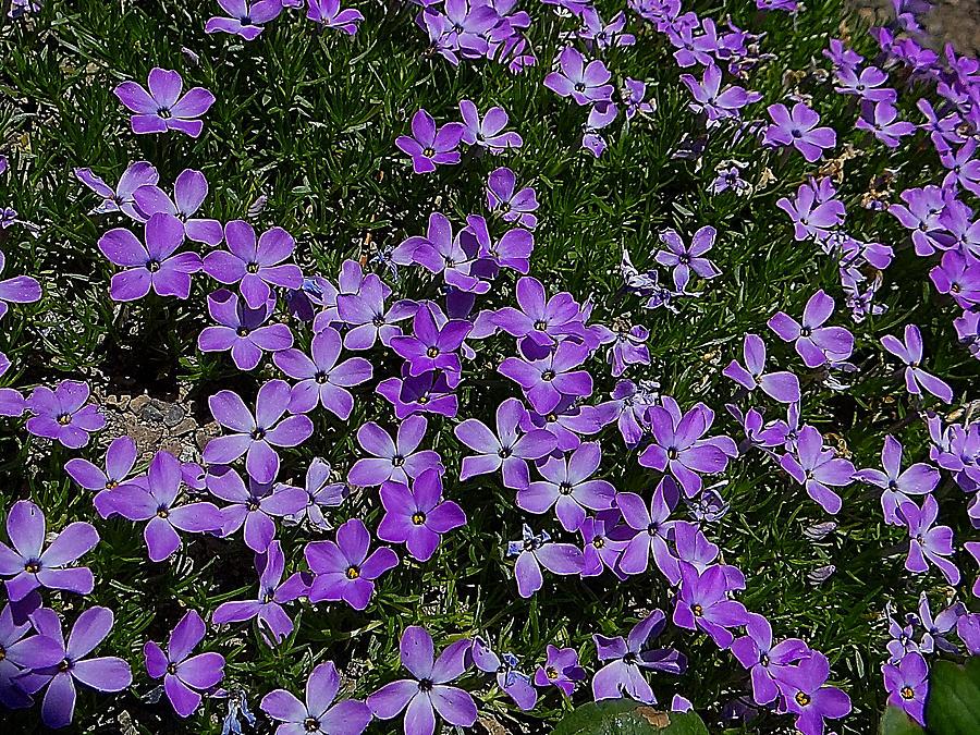 Spring Carpet Photograph