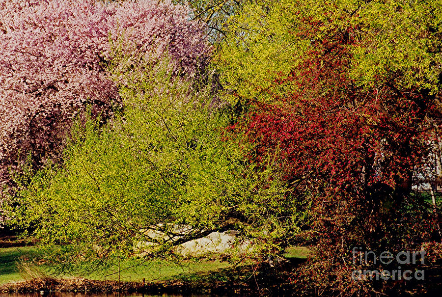 Spring Colors Photograph  - Spring Colors Fine Art Print