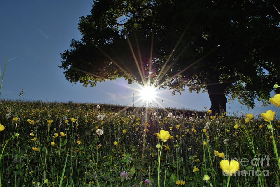 Spring Field Photograph