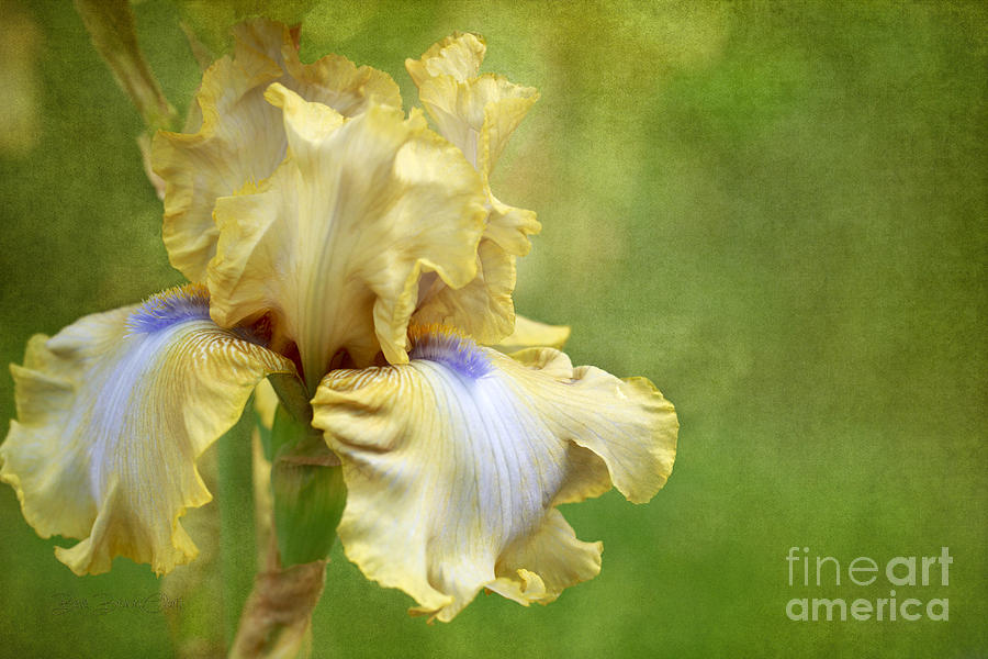 Spring Fling Photograph