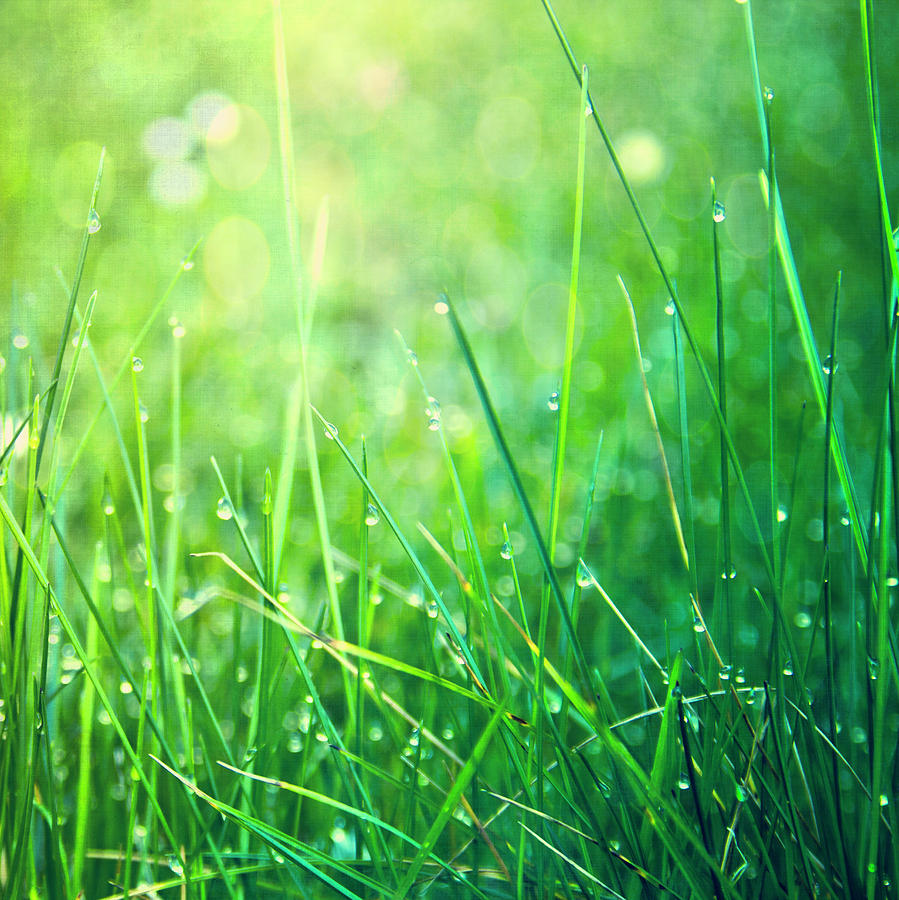 Spring Green Grass Photograph  - Spring Green Grass Fine Art Print