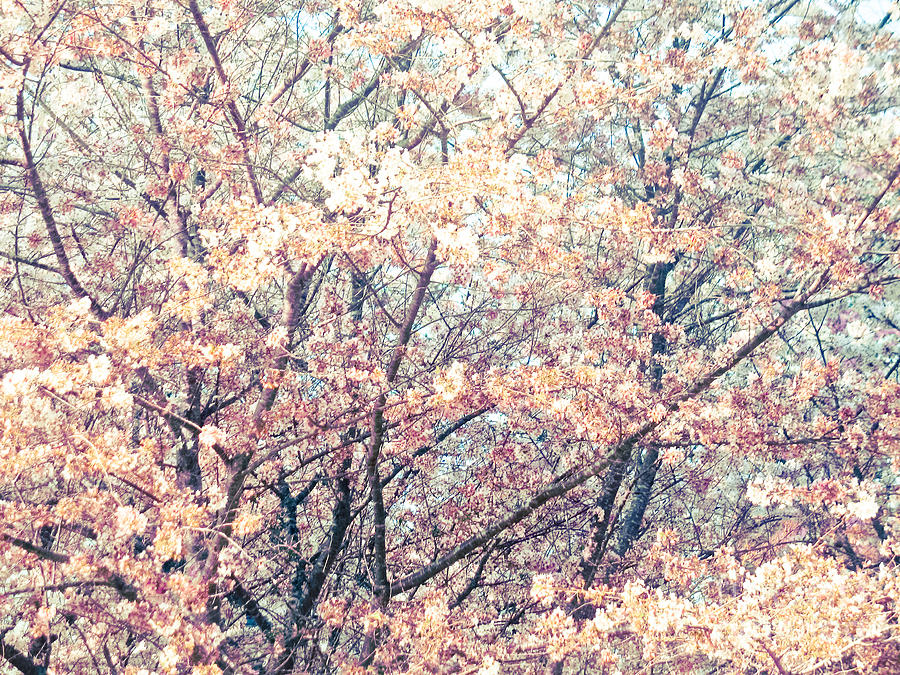 Spring Impressions Mixed Media