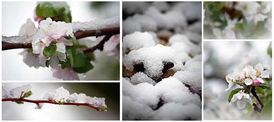 Spring In Calgary Photograph