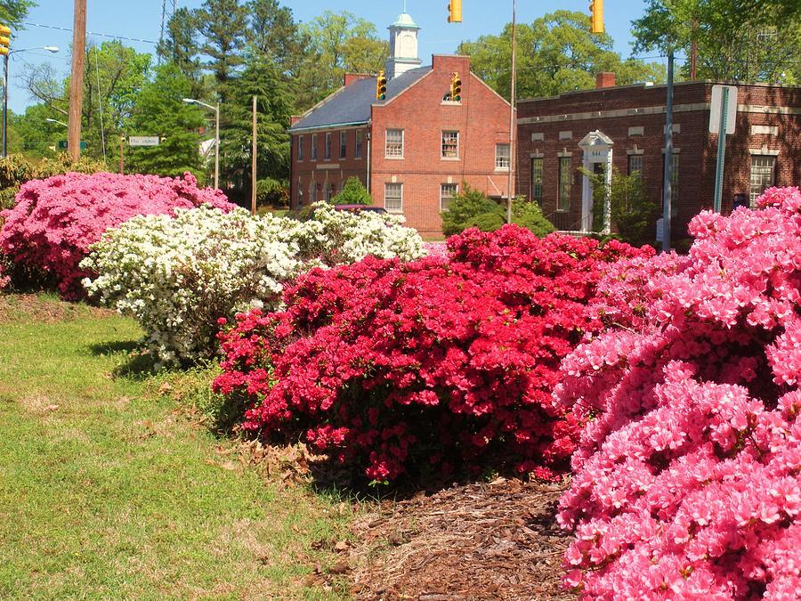Spring In Roanoke Rapids Nc By Jeanette Oberholtzer