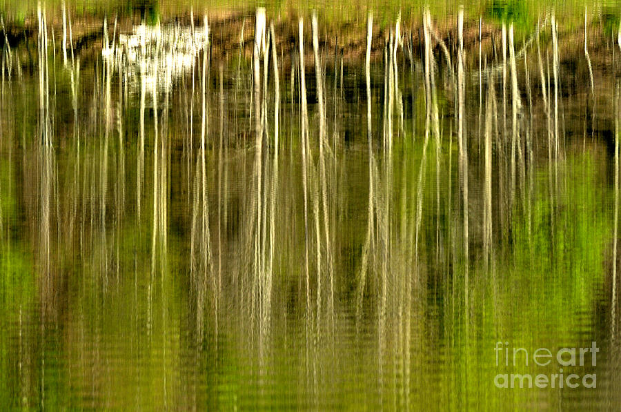 Spring Morning Reflections Photograph