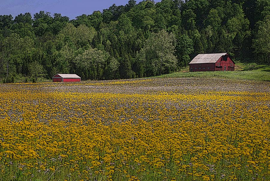 Spring Mustard And Barns Photograph
