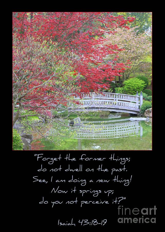Spring Revival Photograph