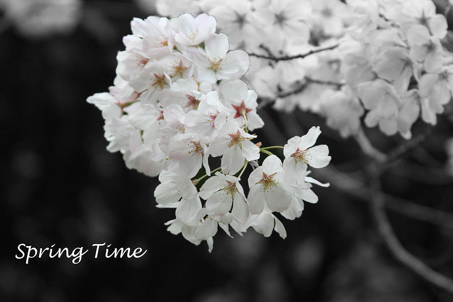 Spring Photograph - Spring Time by Gunz The Great