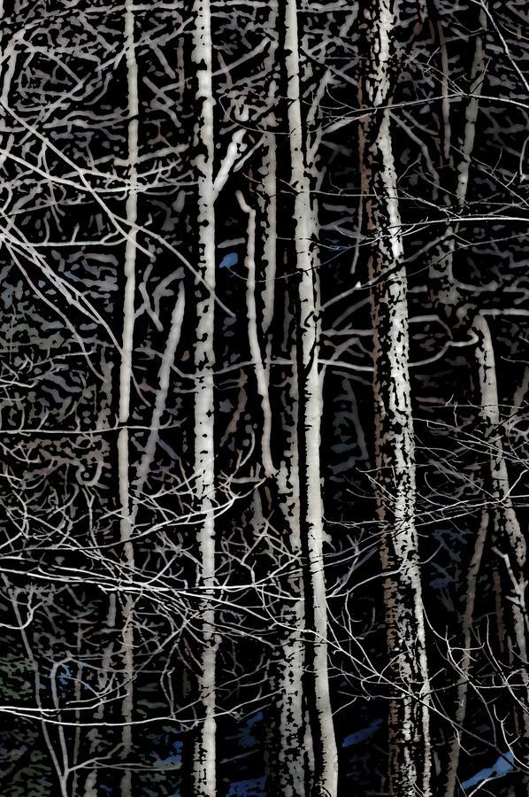 Spring Woods Simulated Woodcut Digital Art