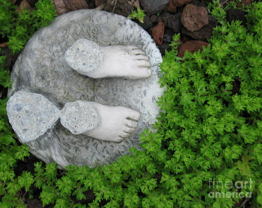 Springs Feet Photograph