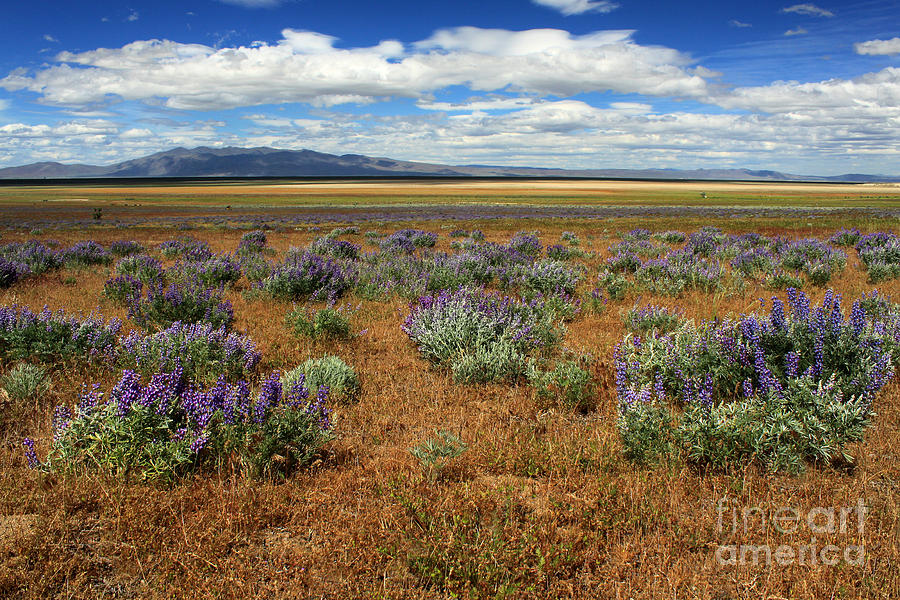 Springtime In Honey Lake Valley Photograph